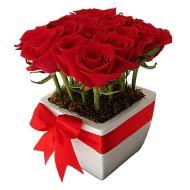 S�lo 12 rosas